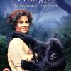 gorillas-mist